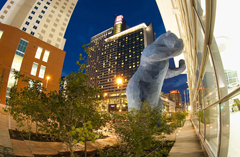 blue bear-hyatt